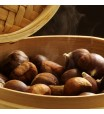 Chinese Chestnut Tree