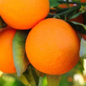Ruby Sweet Orange